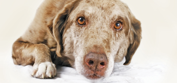 15 Signs Your Dog is in Pain