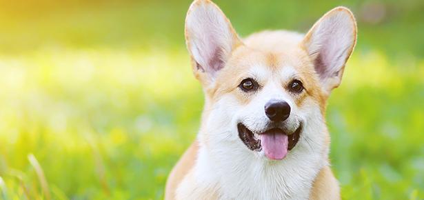 Pet Talk: Keeping Fido Safe in the Summer Heat