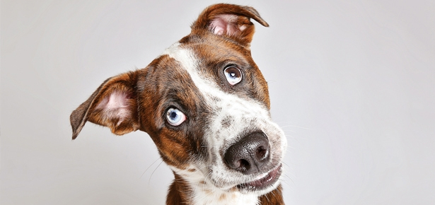 Doggy Photo Booth Helps Shelter Dogs Find Their Forever Homes