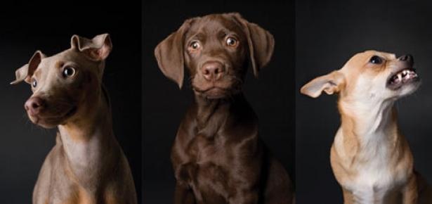 Pill Popping Pups Modern Dog Magazine