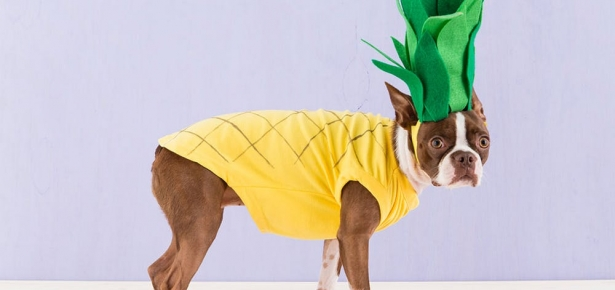 pineapple puppy