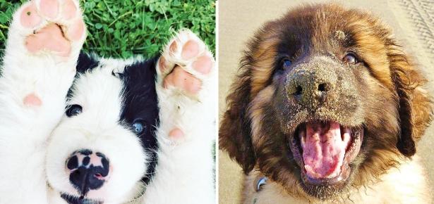 Puppies-Header