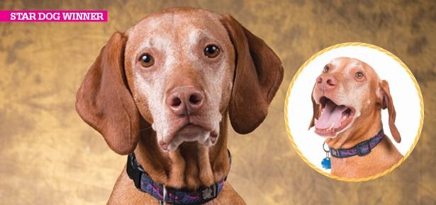 Star Dog Winner: Ruckus and...