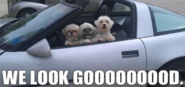 Modern Dog Memes