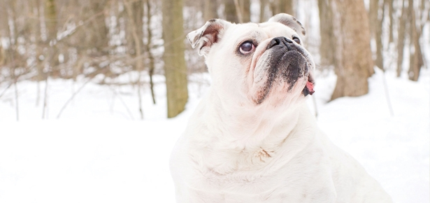 Knowing When it's Time to Say Goodbye to a Beloved Dog