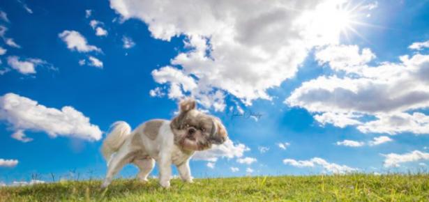 Joshua Oldridge photograph of dog in the sun
