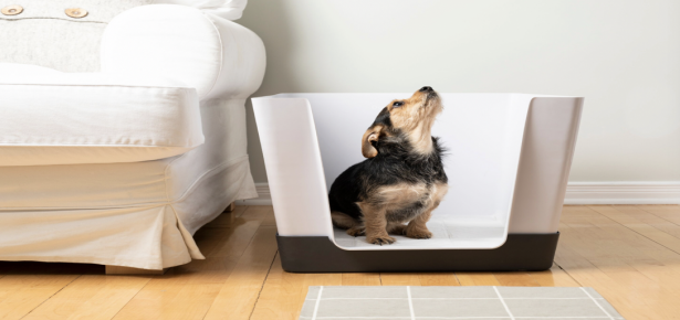 The Doggy Bathroom Revolutionizing How Pets Use Pee Pads