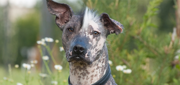 Pet Talk: Research Reveals Canine Skin Microbiome