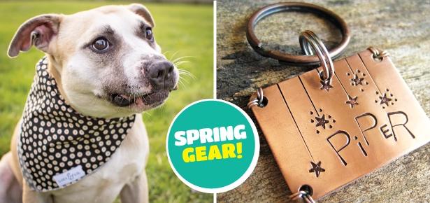 SpringGear-Header