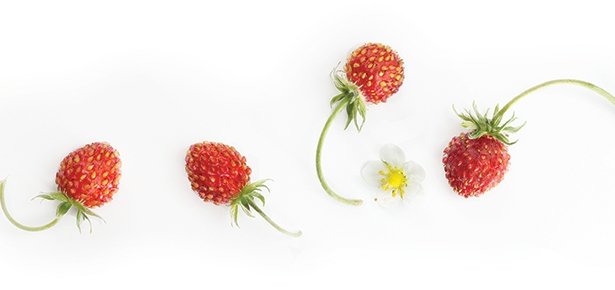 Raspberry-Strawberry Kefir Drink