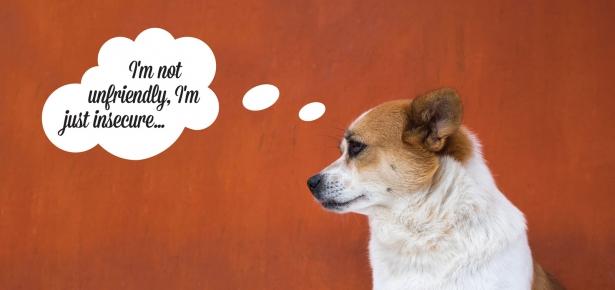 Canine Confidence