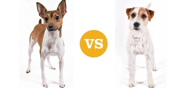 Terriers-Header