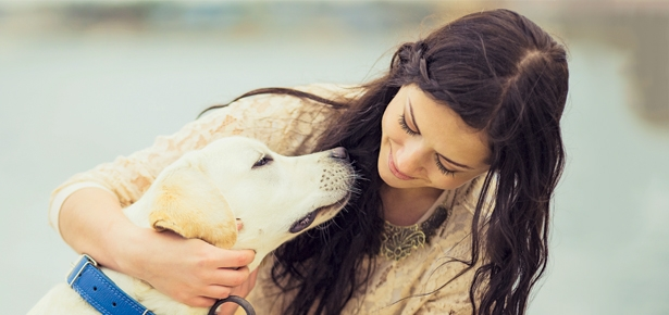 How to Use Touch Therapy to Heal Your Dog