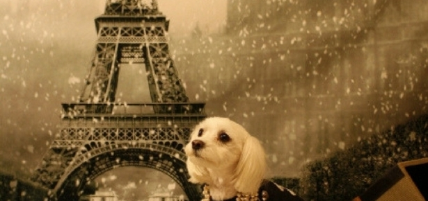 Dogs Across the World