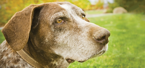 5 Signs Your Dog's Vision is Worsening