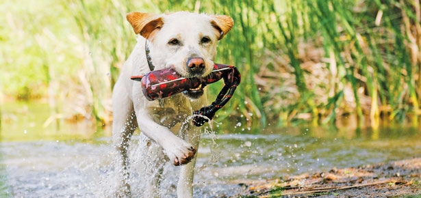 Is Your Dog a Water Dog?