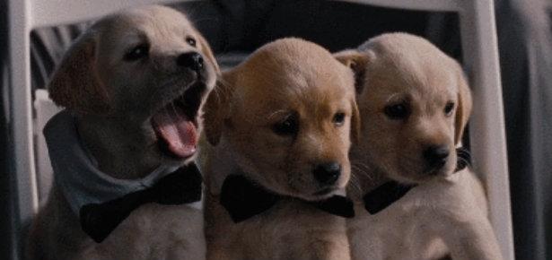Puppy Gifs   Modern Dog magazine