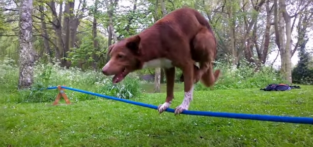 Acrobatic Dog Does Handstand on Rope