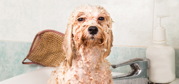 Why You Need to Take a Close Look At Your Dog's Grooming Products