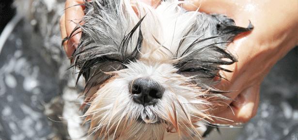 DIY Green Doggie Shampoo