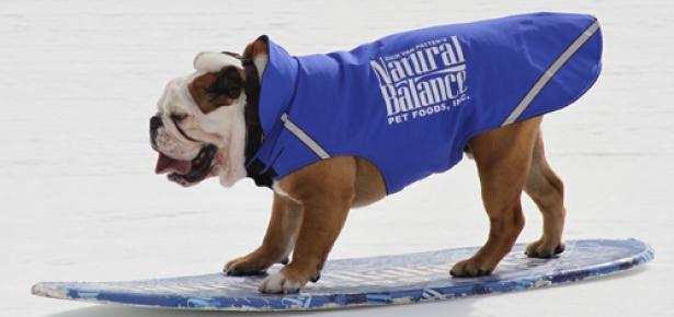 bulldog1.jpg