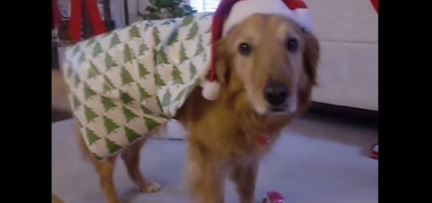 How to Wrap a Dog for Christmas