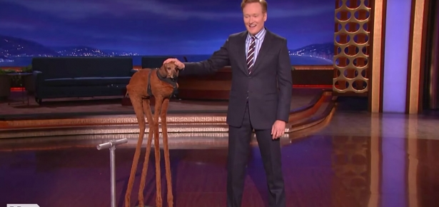 Conan and the Really Tall Dachshund