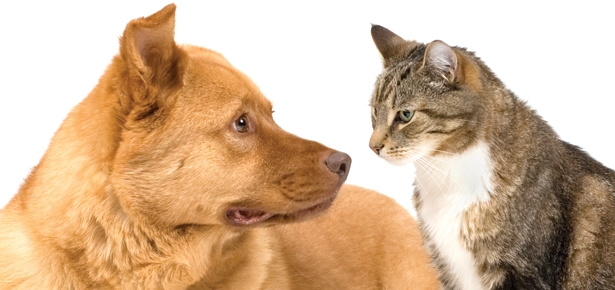 Factoid! Can You Guess How Many U.S. Homes Have Pets?