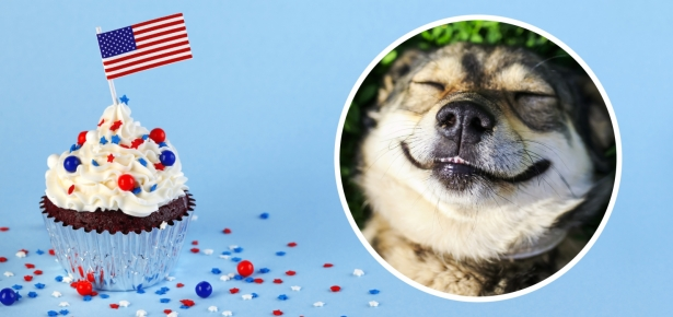 4th Of July Cupcakes for You and Your Dog