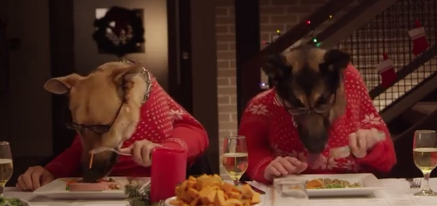 13 Dogs and 1 Cat Eating with Human Hands