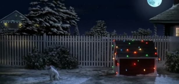 Jack Russell Terrier Waits for Santa