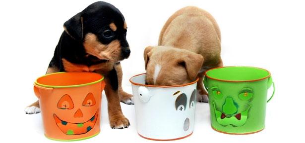 Halloween Chocolate and Dogs