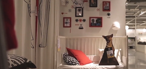 How IKEA is Helping Shelter Animals Find Their New Home