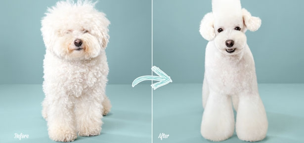 Puppy Styled