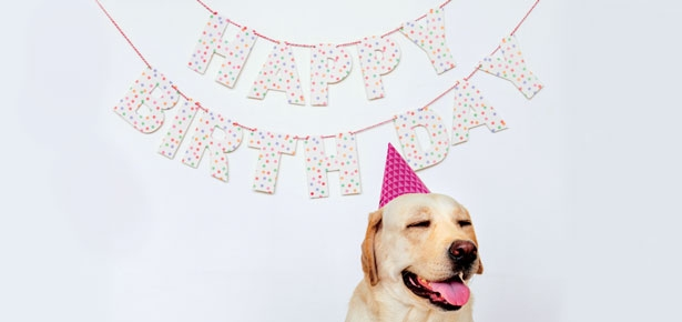 Pawsome Birthday Party