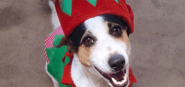 Dogs Who Are Really Nailing This Holiday Spirit Thing