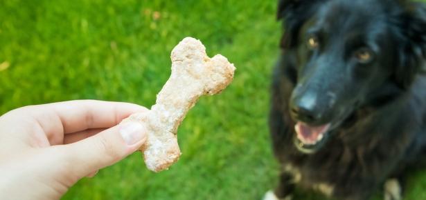 homemade dogs treats recipes