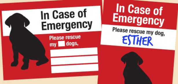 in case of emergency template