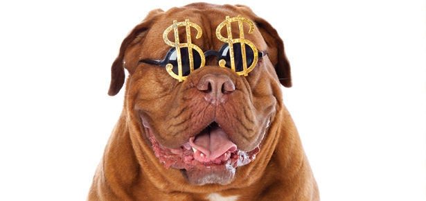 Why We're Fans of Pet Insurance…
