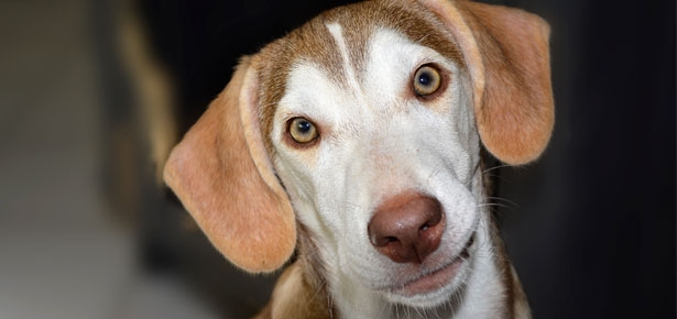 Does Your Dog Have Intestinal Parasites?