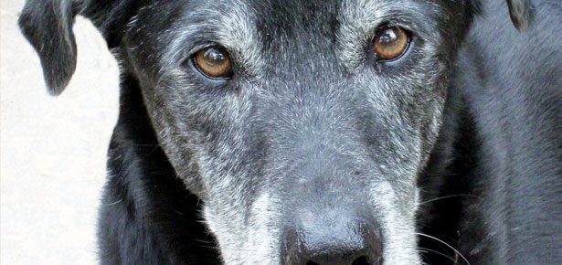 Loving & Losing a Senior Dog