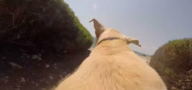 Running From a Dog's Perspective