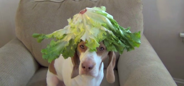 Video of the Day: 100 Seconds, 100 Fruits & Vegetables, One Dog's Head