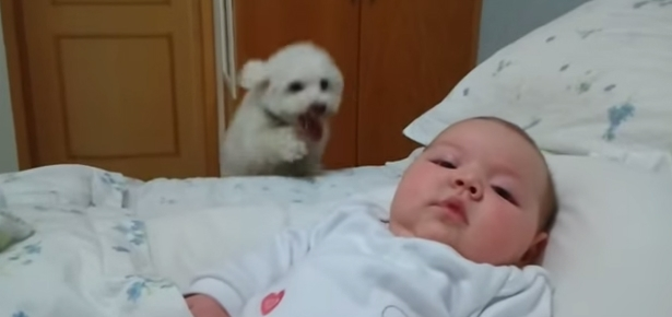 Video of the Day: Puppy REALLY Wants to Meet New Baby