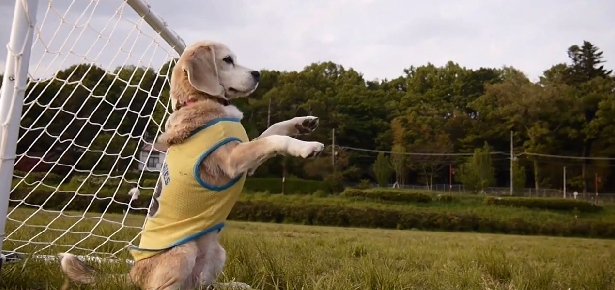 Video of the Day: Watch Out Messi, Here Comes Soccer Dog