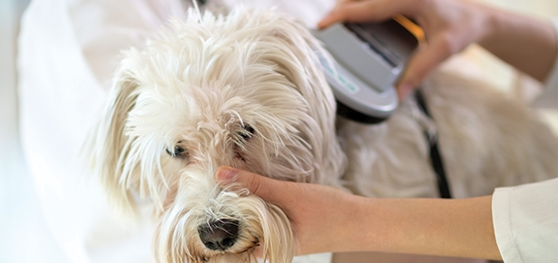 Pet Talk: Getting Your Pets Microchipped