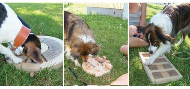 Smart Dog Toys