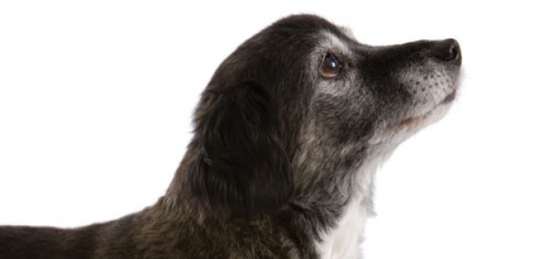 Old dogs losing bladder control and if you can potty training
