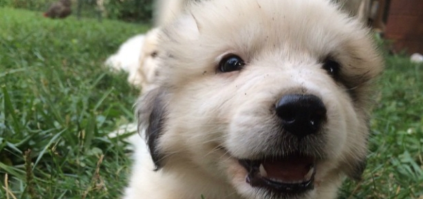 Unbelievably Cute Puppies