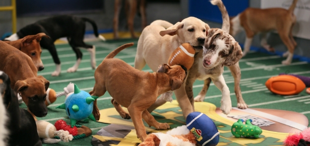 Puppy Bowl XI